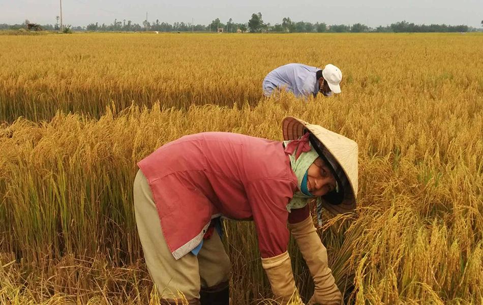 wonders-of-vietnam-interesting-tourist-attractions-15-days-12
